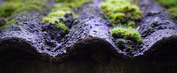 asbestos-roof-with-moss